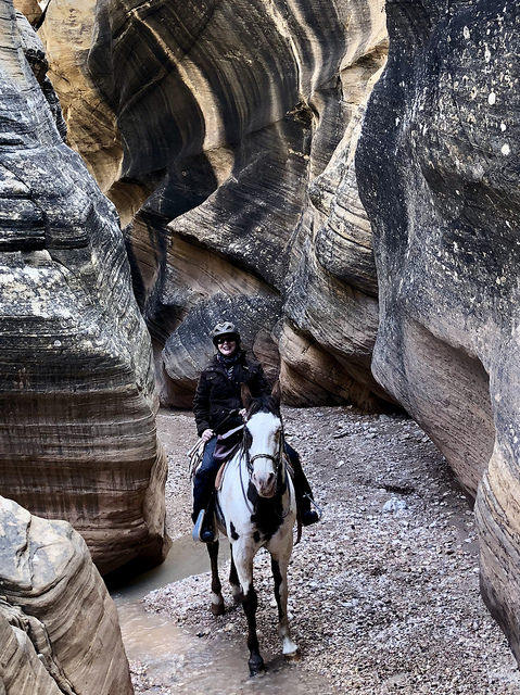 nancy d brown, writing horseback, rubys grand adventure, horseback riding, grand staircase escalante, utah horseback riding