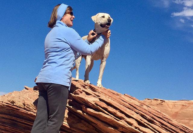 nancy brown, labrador retriever, white sierra