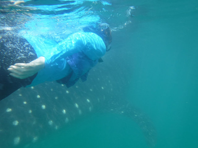 nancy d brown, coolibar, whale shark, cancun, mexico,
