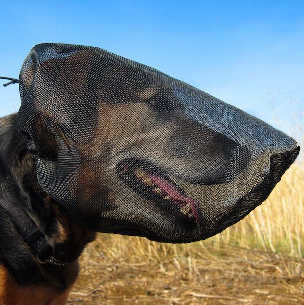 outfox field guard, foxtail protection for dogs, dog head net, dog