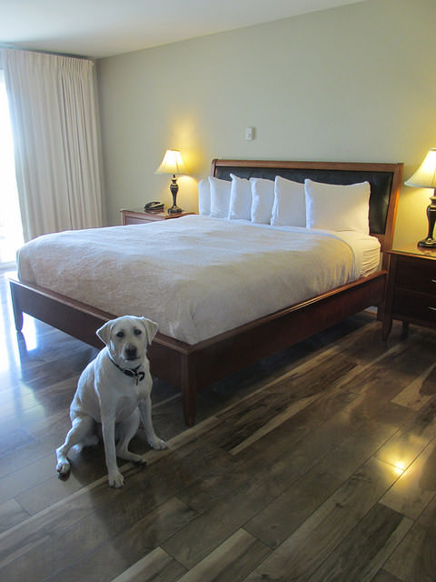 dog-friendly hotel room, gold beach hotel, pet-friendly hotel, pet-friendly gold beach hotel, gold beach hotel room, pacific reef hotel