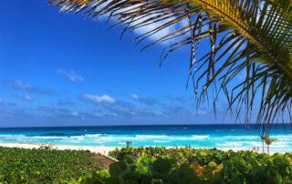 park royal cancun beach resort, white sand beach, mexico caribbean sea, palm frond,