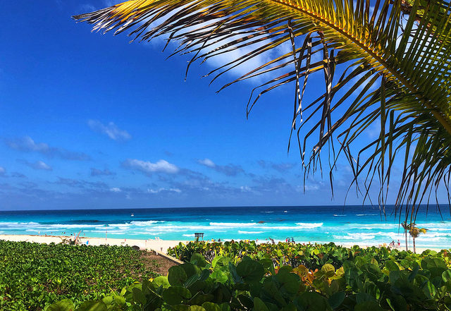 park royal cancun beach resort, white sand beach, mexico caribbean sea, palm frond,