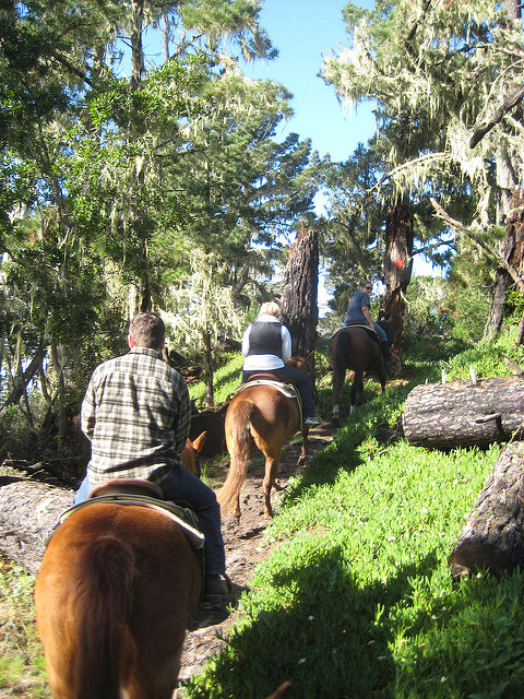 things to do in monterey, horseback riding in pebble beach, horse riding in del monte forest, pebble beach trail ride