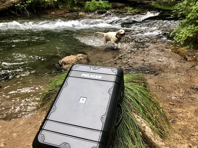 Pelican carry-on suitcase rests on a tree stump next to Mill Creek in Southern Oregon. A yellow Labrador Retriever emerges from the creek, ready to shake water from its coat, onto the waterproof suitcase.