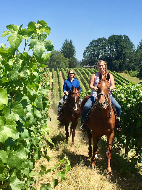 equine wine tour, horseback riding near portland, plum hill vineyards, bella rues stables, nancy brown, nikki reynolds, horse riding, tualatin valley, willamette valley, oregon