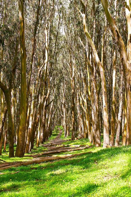 presidio, presidio national park, san francisco, california, trees