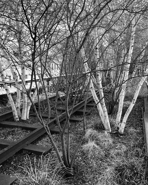 railroad tracks, aspen trees, black & white, new york, park, meatpacking district