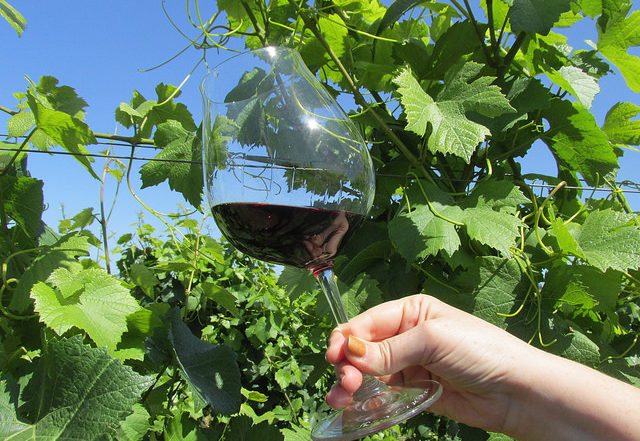 wine tasting, tualatin valley, willamette valley, raptor ridge winery, pinot noir, wine, oregon wine tasting