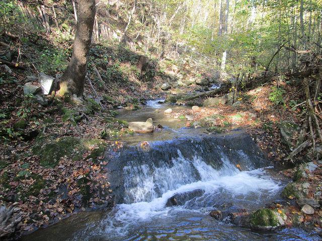 Roaring Run Falls, Virginia, walk in the woods