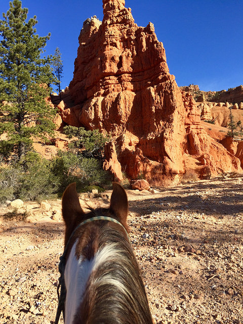 rubys horseback adventures, horse riding, bryce canyon, utah