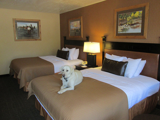 pet-friendly hotel room, ruby's inn, bryce canyon, utah