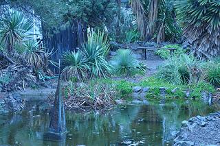 Ruth Bancroft Garden, dry garden