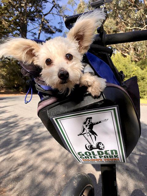 dog, golden gate park segway tour, san francisco electric tour compay, san francisco, california