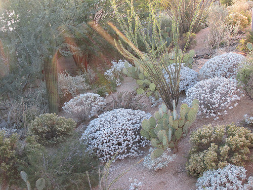 """Arizona"", ""Sonoran desert"", ""Scottsdale"""