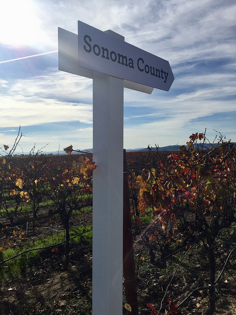 sonoma county, vineyards, grateful table, north bay wildfires, california wine country