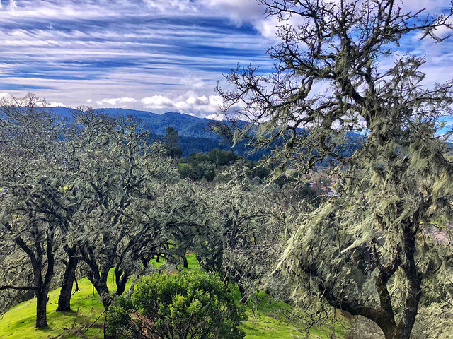 oat hill mine trail, spanish moss, calistoga napa county regional park, how to do calistoga like a local