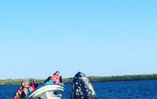 magdalena bay, whale watching,