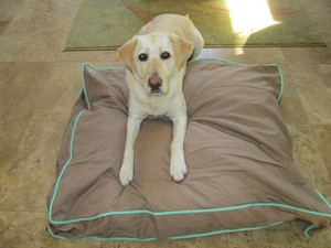 dog bed duvet for home or travel with pets   nancy d brown