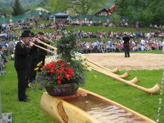 """""""Swiss Long Horns"""""""