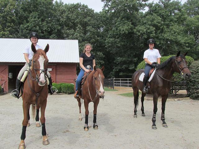 university of south carolina equestrian team,