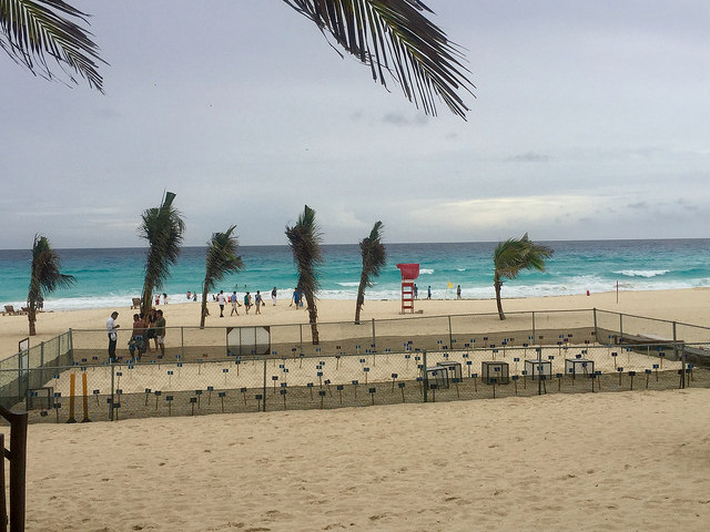 sea turtle nests, westin lagunamar cancun, mexico, turtle care program