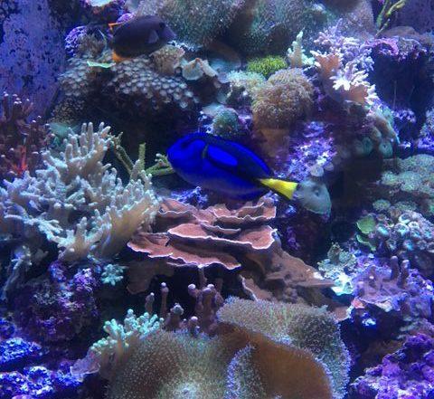 Marine life at the Aquarium of the Bay