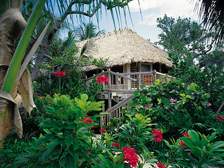 """Little Palm Island Bungalow"""