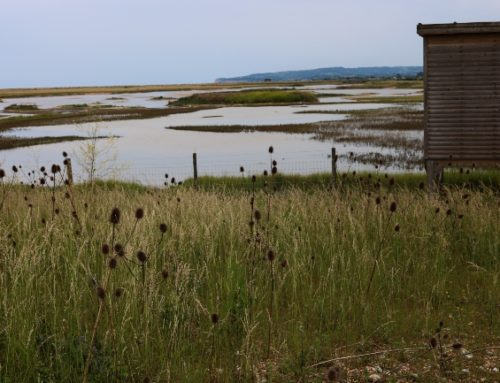 Rye Harbour Nature Reserve: A Gem Not Far from London