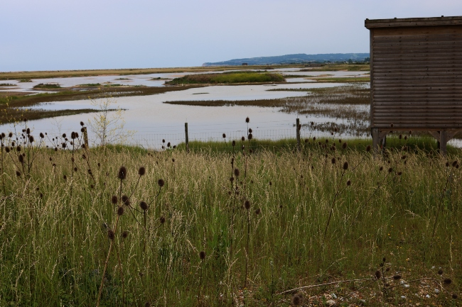 Rye Harbour Nature Reserve Bird Blind