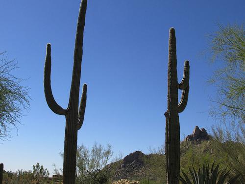 """""""saguaro cactus"""", """"Scottsdale, Arizona"""""""