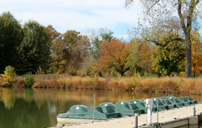 Paddle boat rides are another activity in Forest Park
