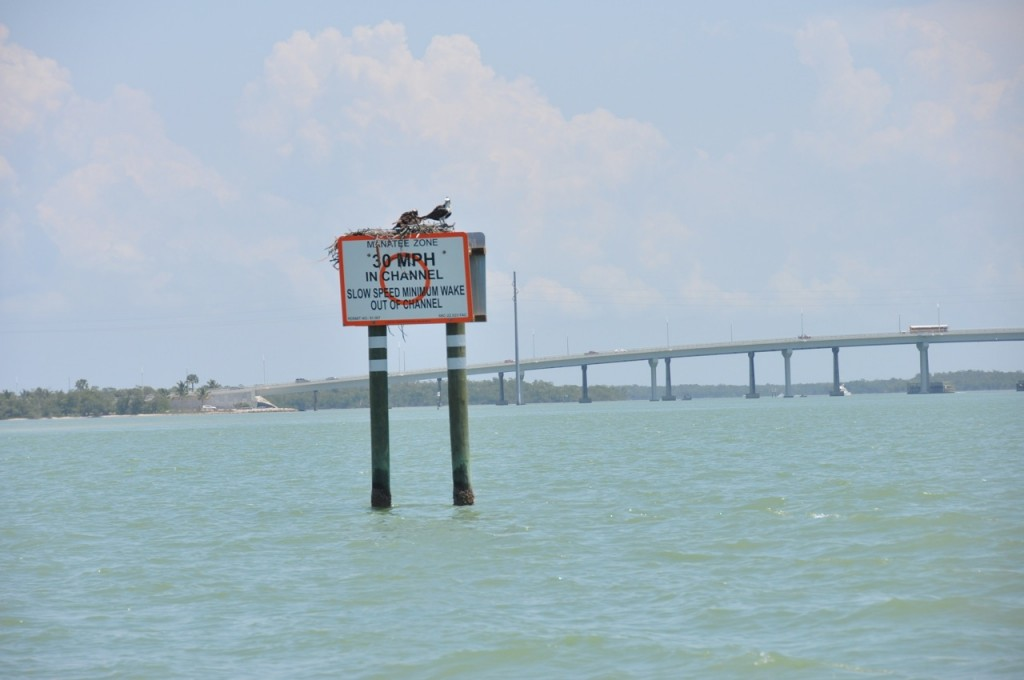 Things to See and Do on Marco Island